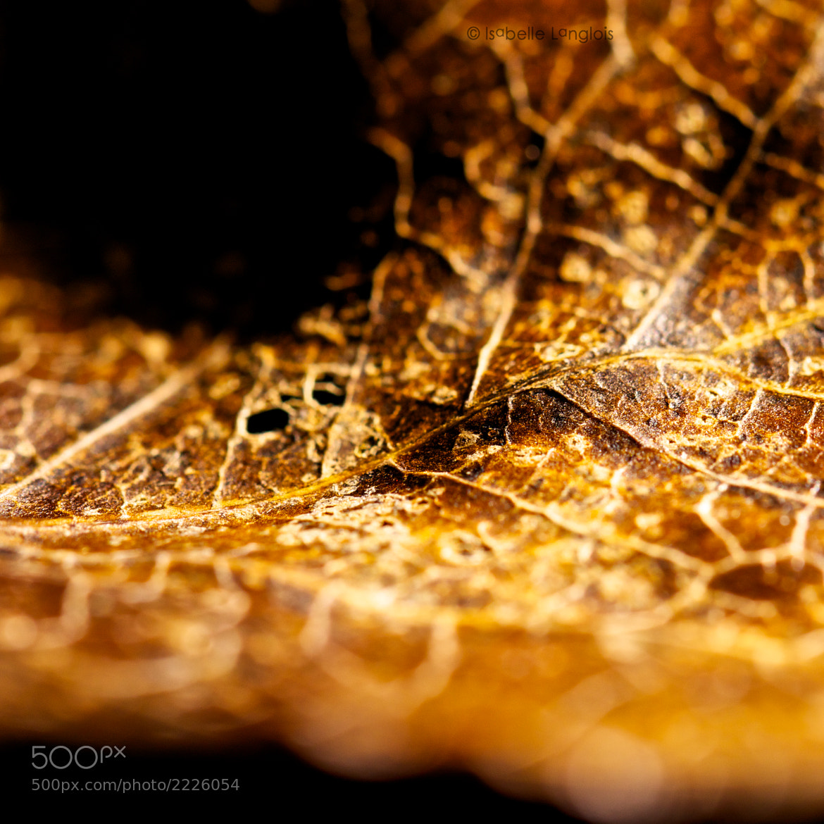 Photograph Brown leaf by Isabelle Langlois on 500px