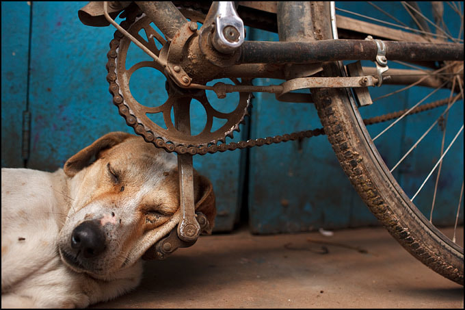 Photograph Sleeping Dog - Varanasi, India by Maciej Dakowicz on 500px