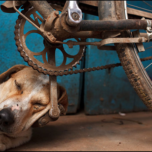 Sleeping Dog - Varanasi, India