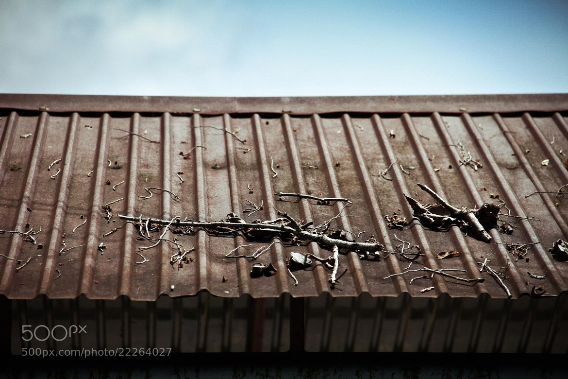 Photograph Roof by Nitchakan Changsan on 500px