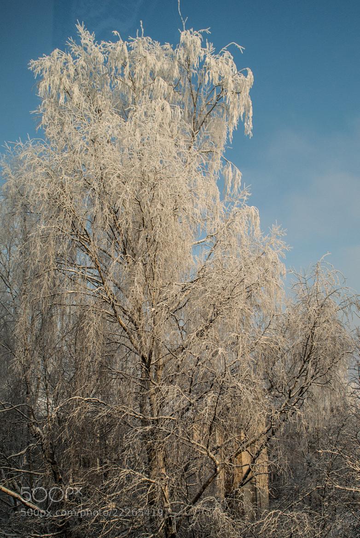 Photograph Behind the window by Olga Filipova on 500px