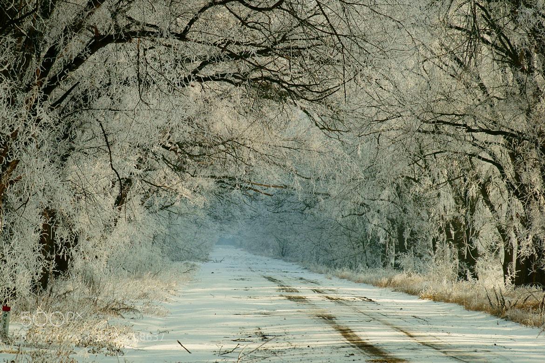 Photograph Winter road by Grigory Nesvetaev on 500px