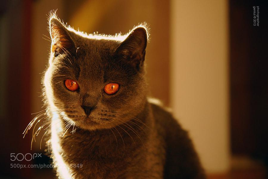 Photograph orange by Alexander Mihailov on 500px