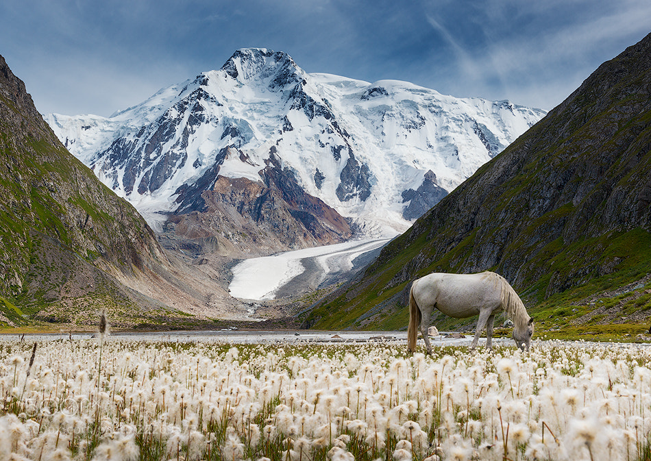 Interesting Photo of the Day: Is There a Unicorn in Kyrgyzstan?