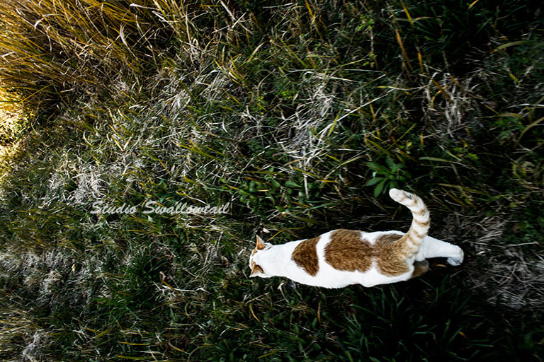 Photograph Cat tail by fuu jin on 500px