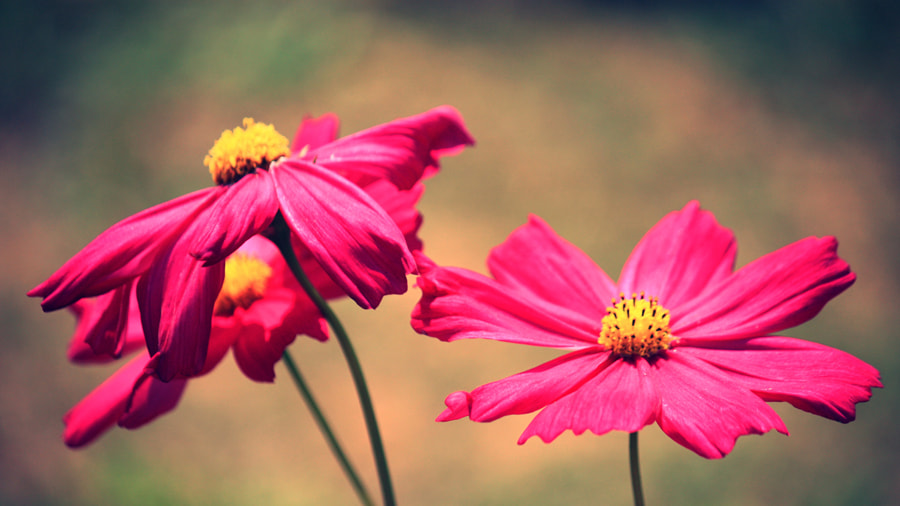 Photograph Cosmos by Siriwat Wongchana on 500px