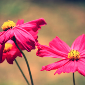 Cosmos by Siriwat Wongchana (siriwat)) on 500px.com
