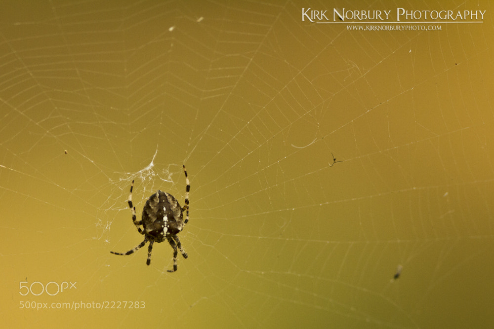Photograph The Spider And It's Web by Kirk Norbury on 500px
