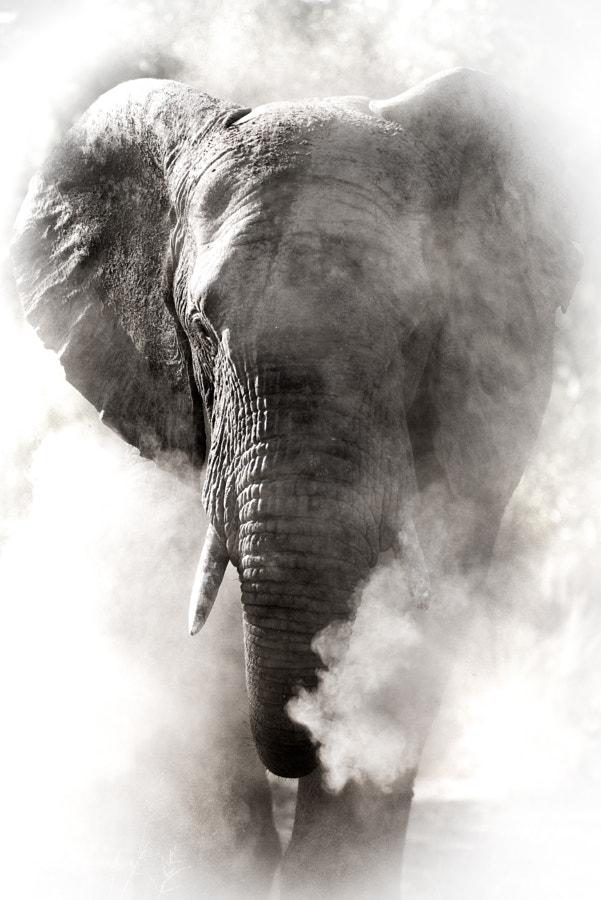 Dust Elephant by Rudi Hulshof on 500px.com