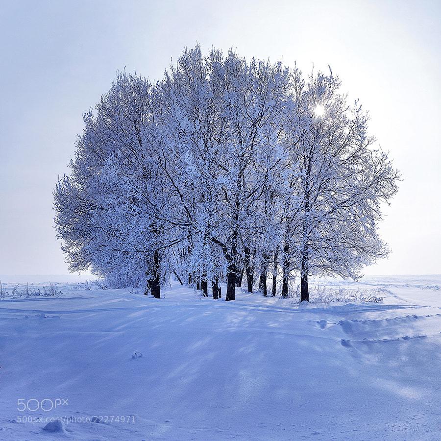 Photograph Frost by Salavat Fidai on 500px