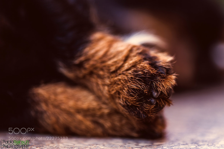 Photograph Little legs.- by Pablo Reinsch on 500px