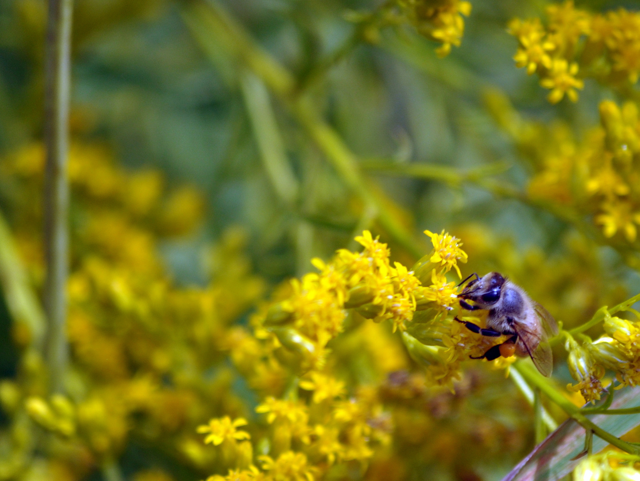 Photograph Bee nice by David Elwood on 500px