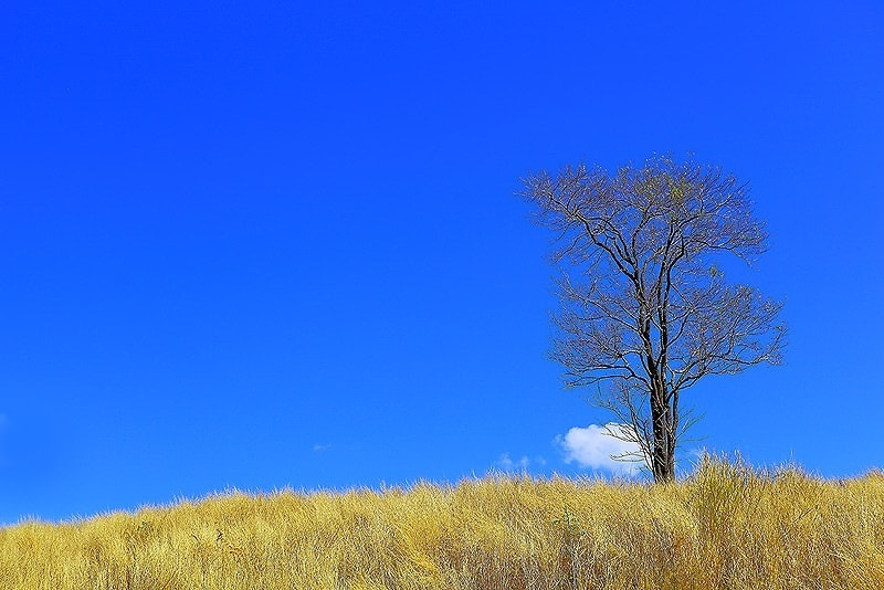 Photograph The Tree by Suttipon Thanarakpong on 500px