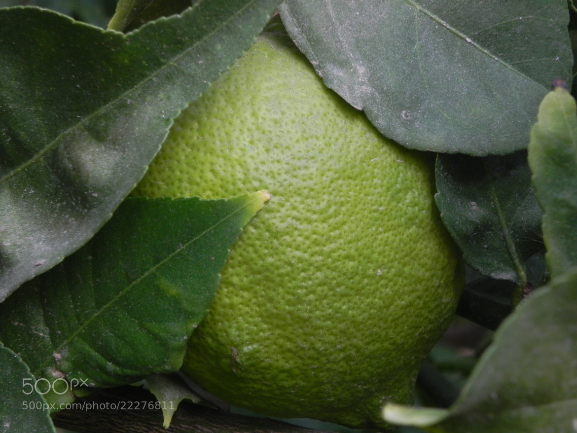 Photograph an hidden lemon by Liora Levin on 500px