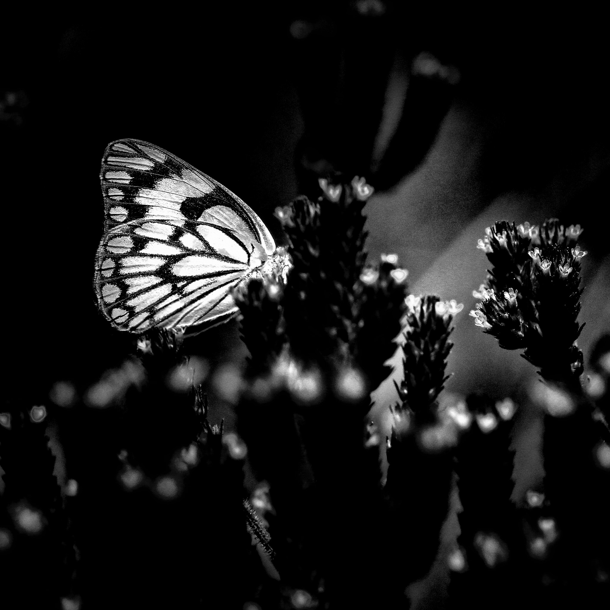 Photograph Butterfly by Pieter Oosthuysen on 500px