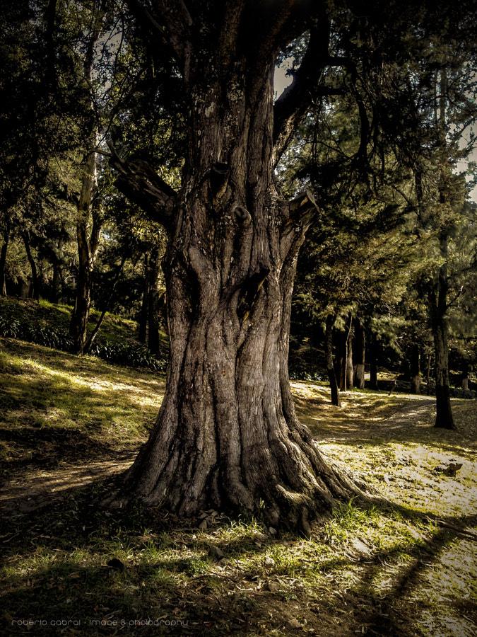 Mucho que contar de Roberto Cabral │Image & Photography en 500px.com