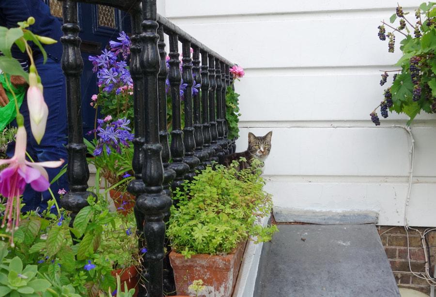 Cat in the Garden b Sandra on 500px.com