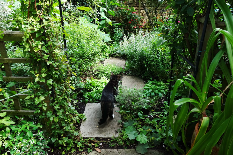 Cat in the Garden by Sandra on 500px.com