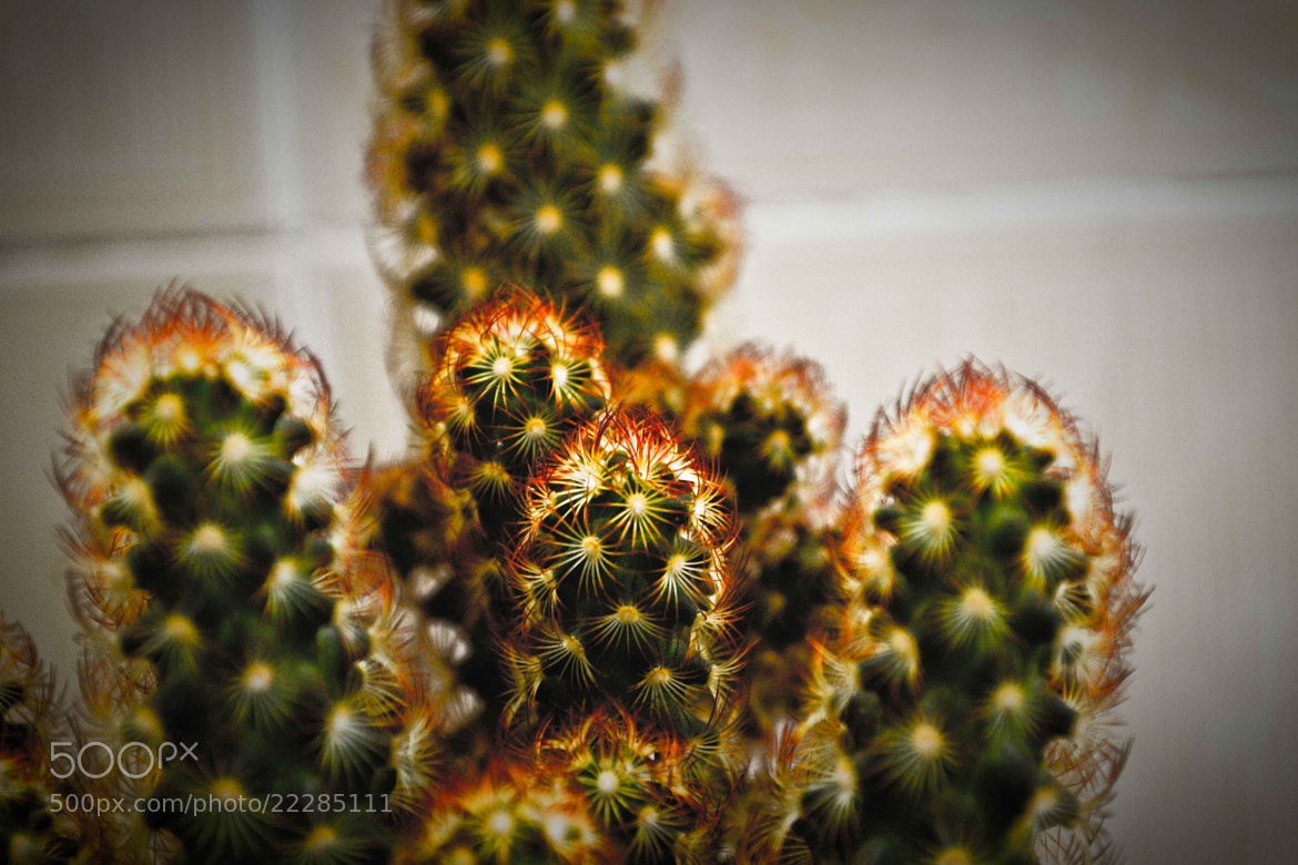 Photograph Cactus by LH Padovan on 500px