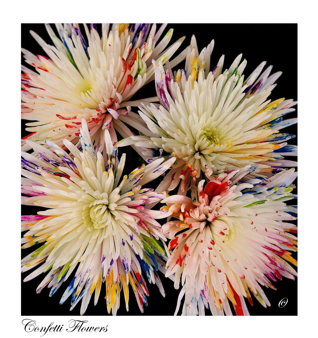 Photograph Confetti Flowers #2 by Jan Siemucha on 500px