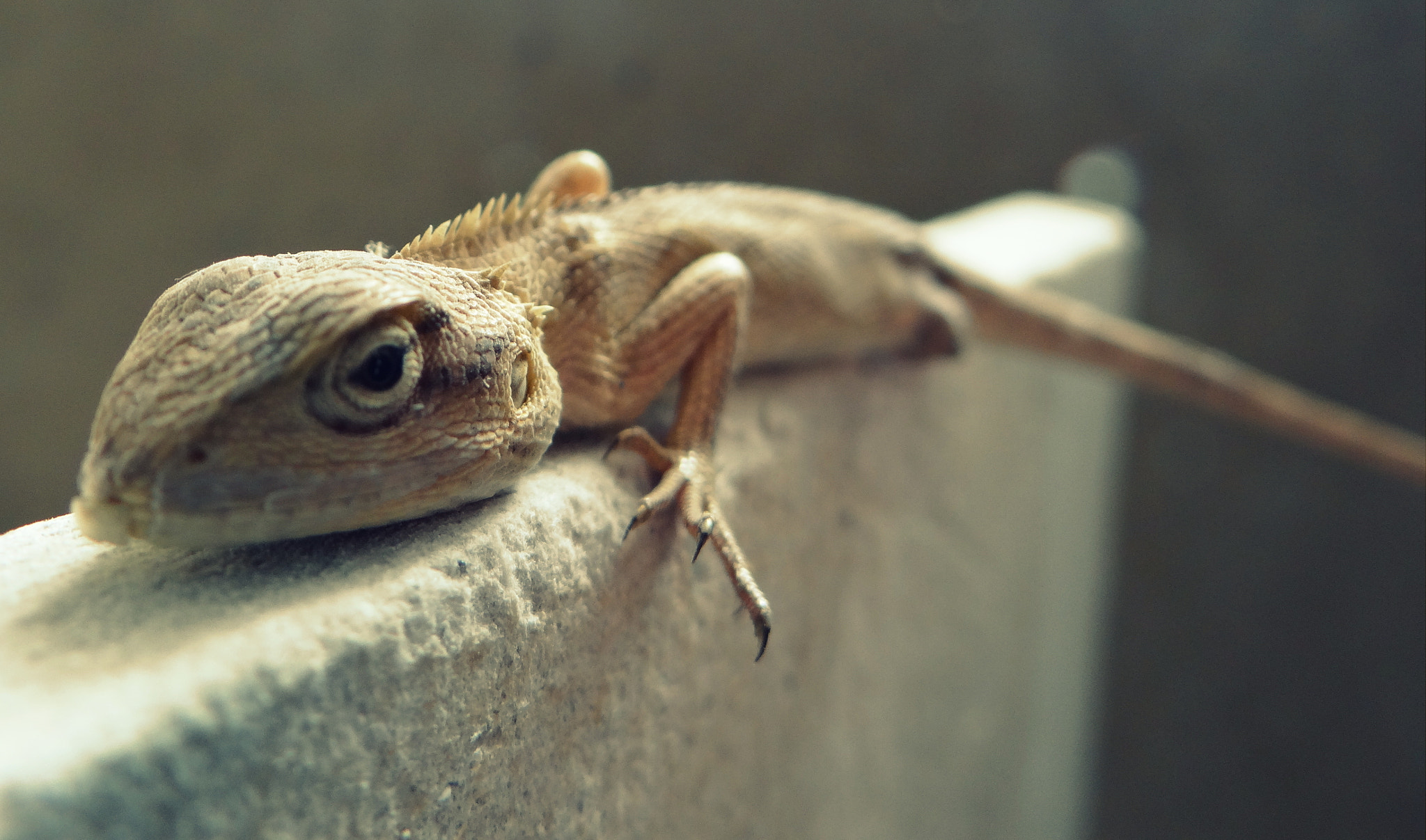 Photograph Chameleon at rest ! by Gaurav Chaudhary on 500px