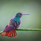 A humming bird in Costa Rica takes a perch and checks me out while I'm pointing my camera at him.