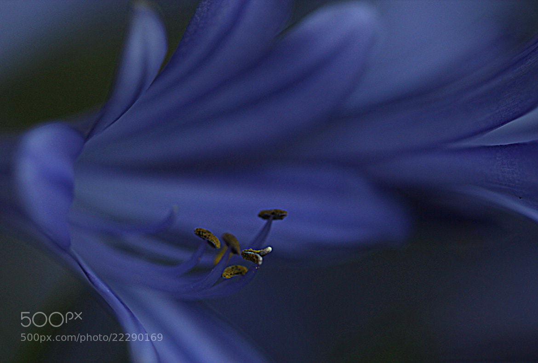 Photograph the secret of blue by Mukerrem Misirlioglu on 500px
