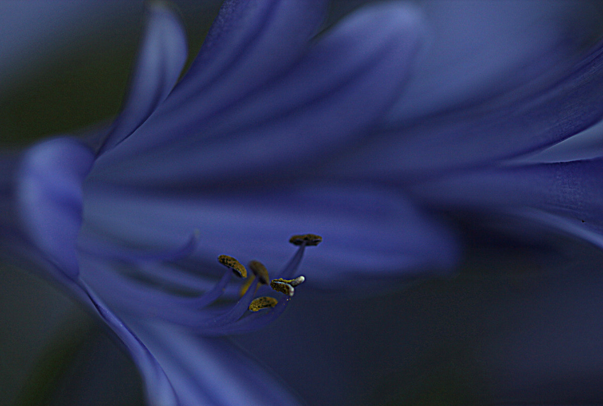 Photograph the secret of blue by Mukerrem Misirlioglu on 500px