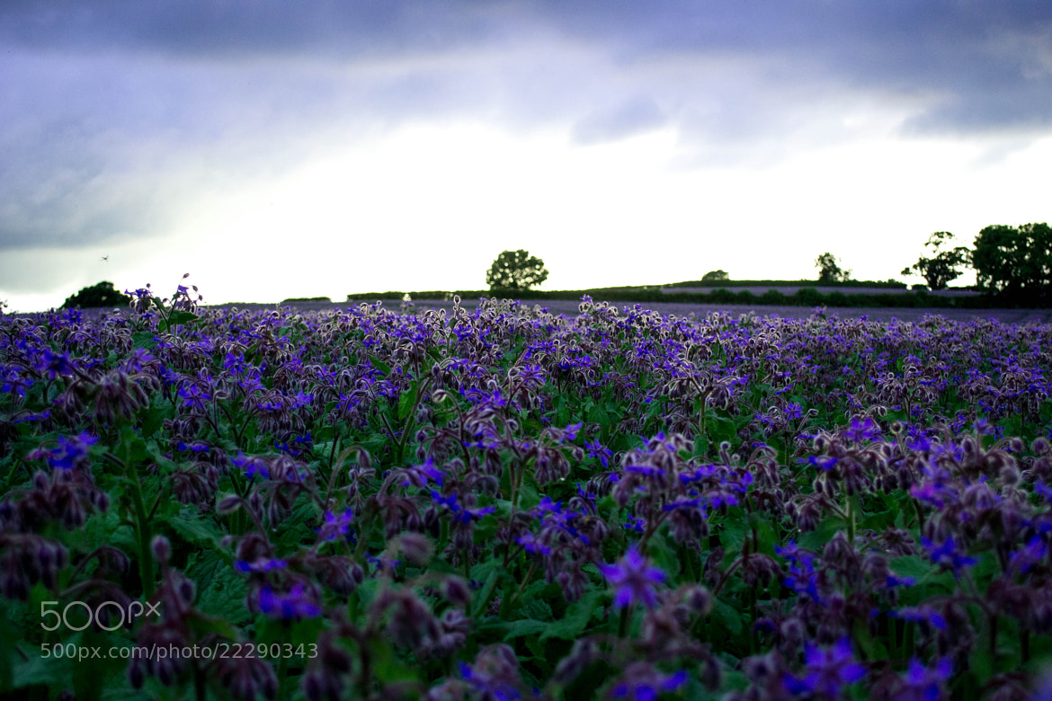 Photograph Over the fields and far away by Sarah johnson on 500px