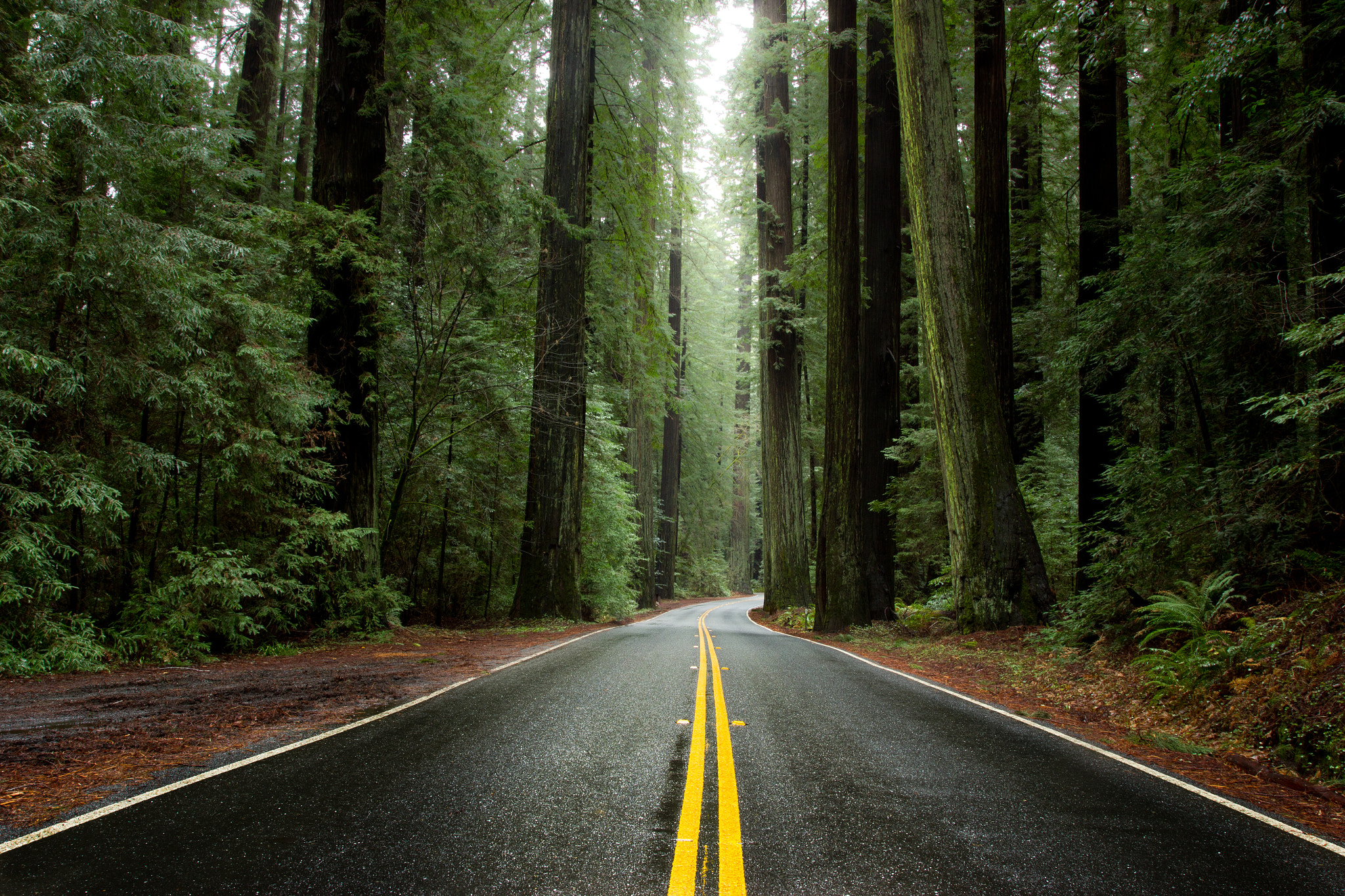 Photograph Avenue of the Giants by Justin Jones on 500px
