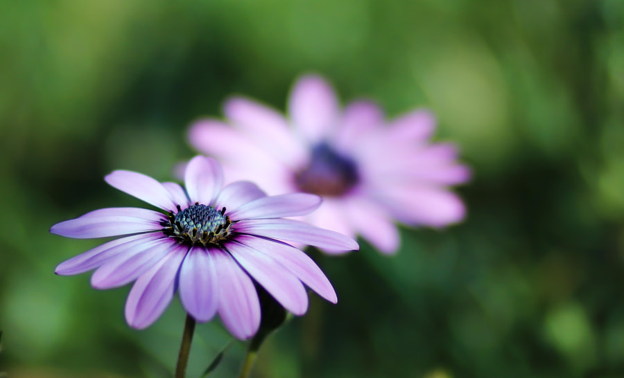 """Floral Nature Photo """"The tale of two flowers"""" by Nature Photographer Elena K. Manzo on 500px.com"""
