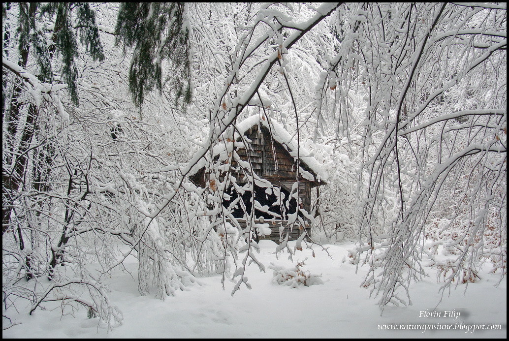 Photograph Winter by Filip Florin on 500px