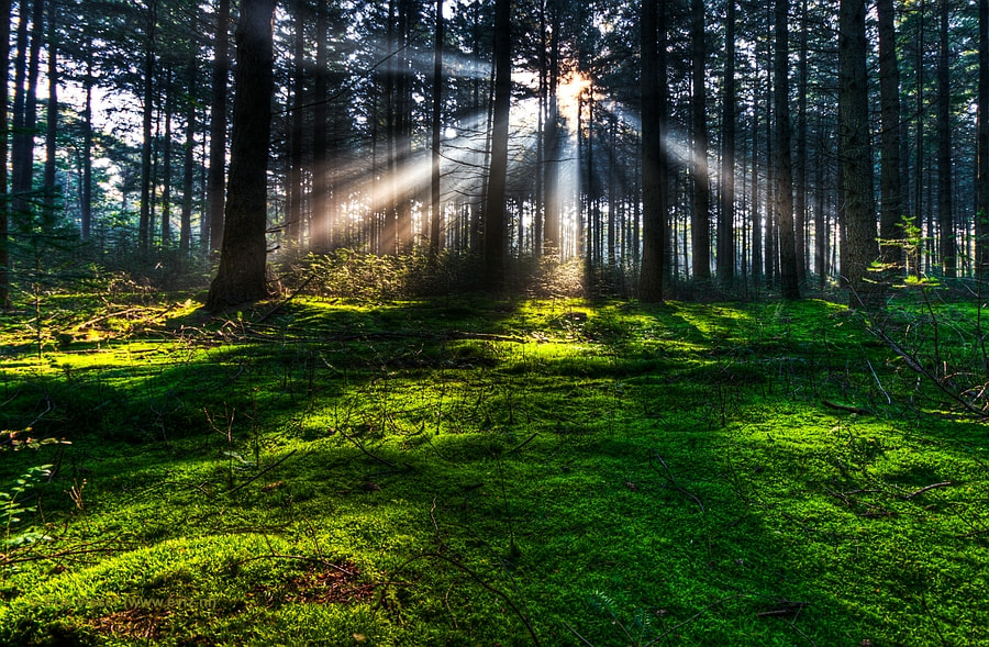 Photograph Sun in the Forest by Erik Visser on 500px