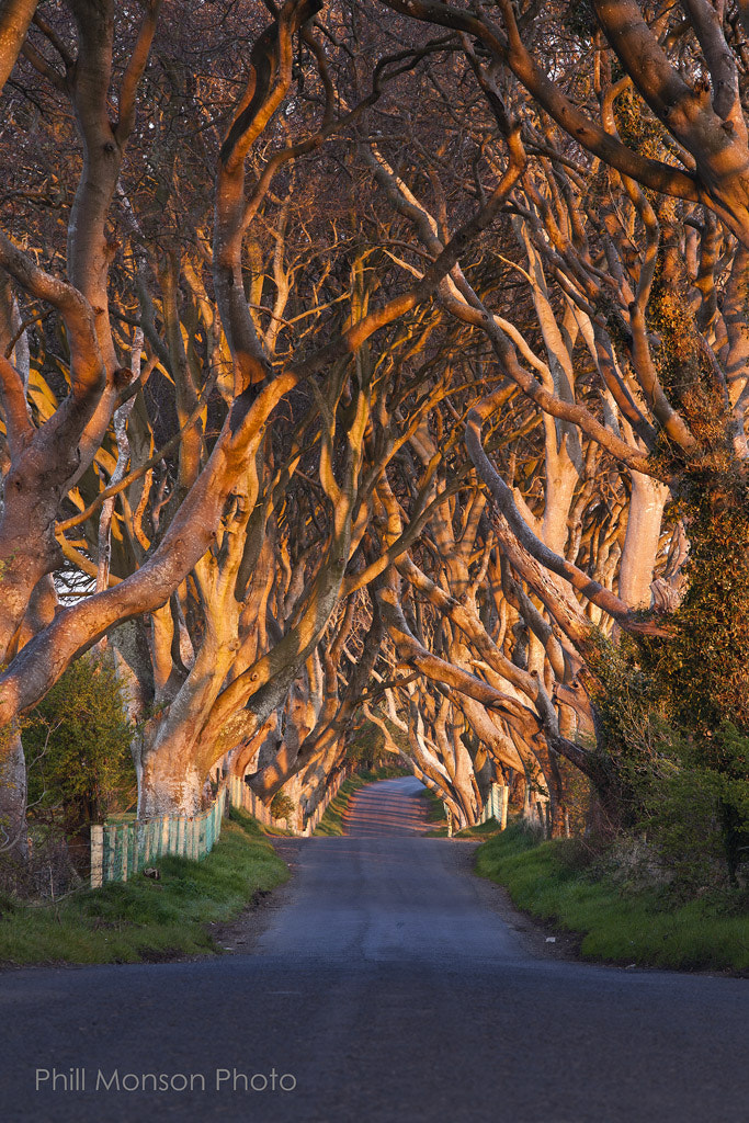 Photograph The Dark Hedges by Phill Monson on 500px