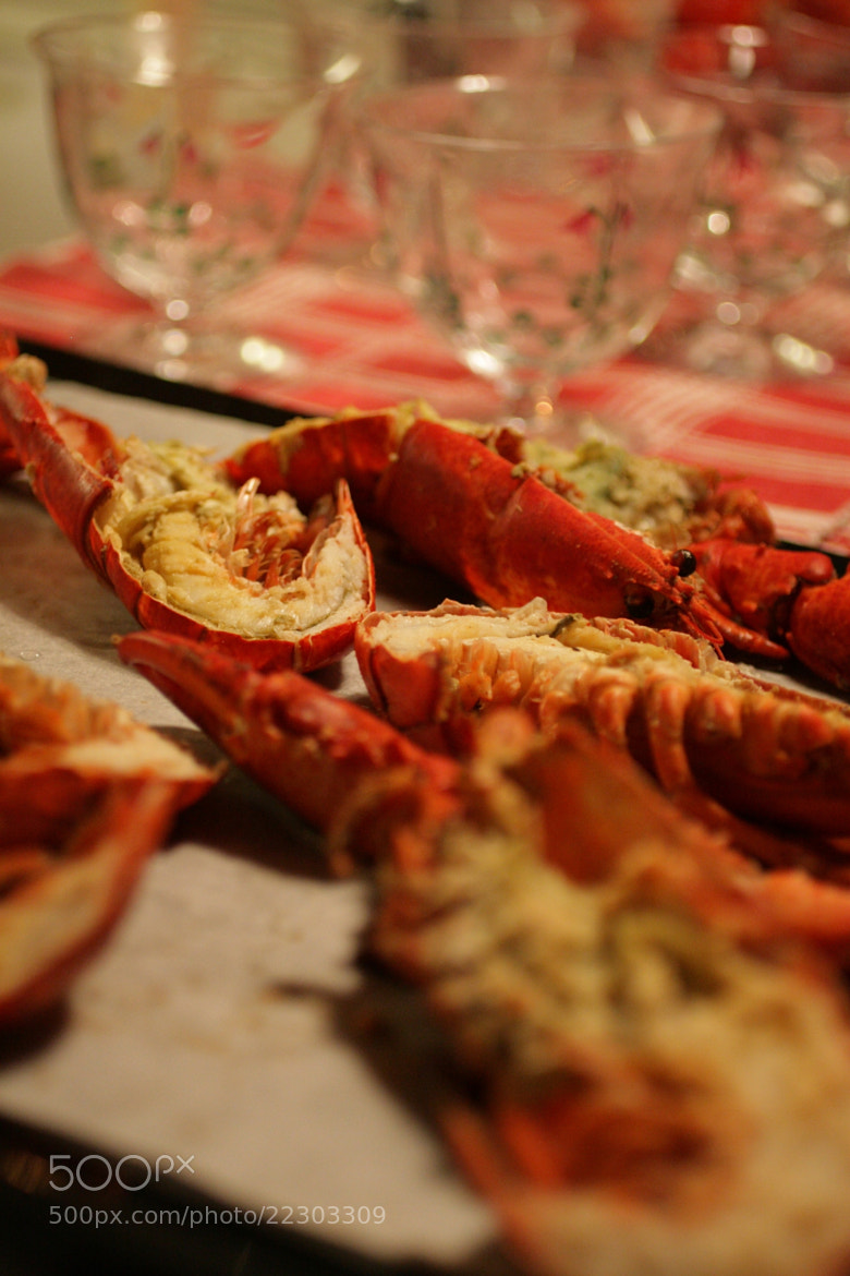 Photograph Lobster can never be bad  by majawesterlund on 500px