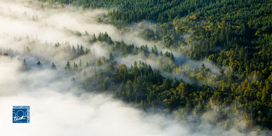 A layer of fog reaches up forest-laden slopes.
