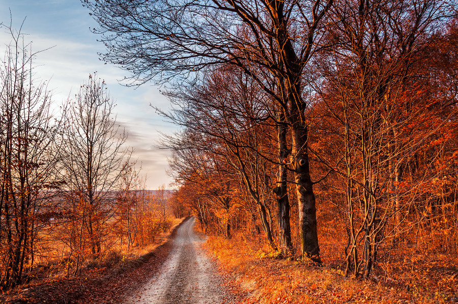 Photograph The Way by MARIAN Gabriel Constantin on 500px