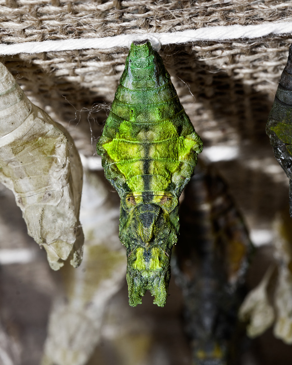 Photograph Alien Chrysalis  by John Mead on 500px