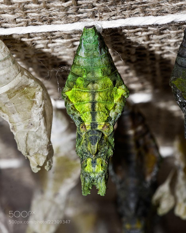 Photograph Alien Chrysalis  by John Mead on 500px
