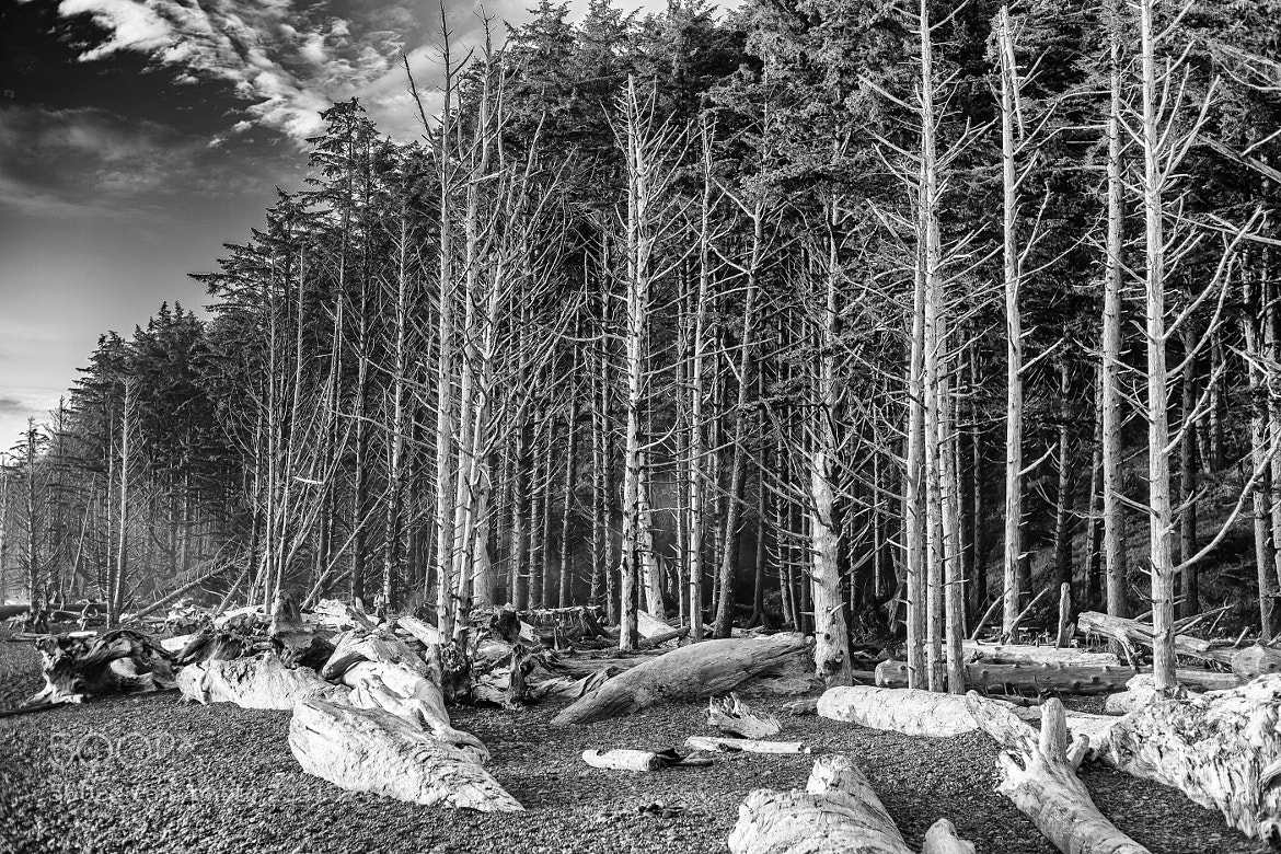 Photograph The Ghost Forest by William Dodd on 500px