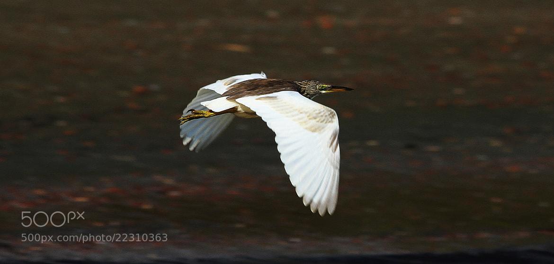 Photograph Birde by Dhruv Ashra on 500px