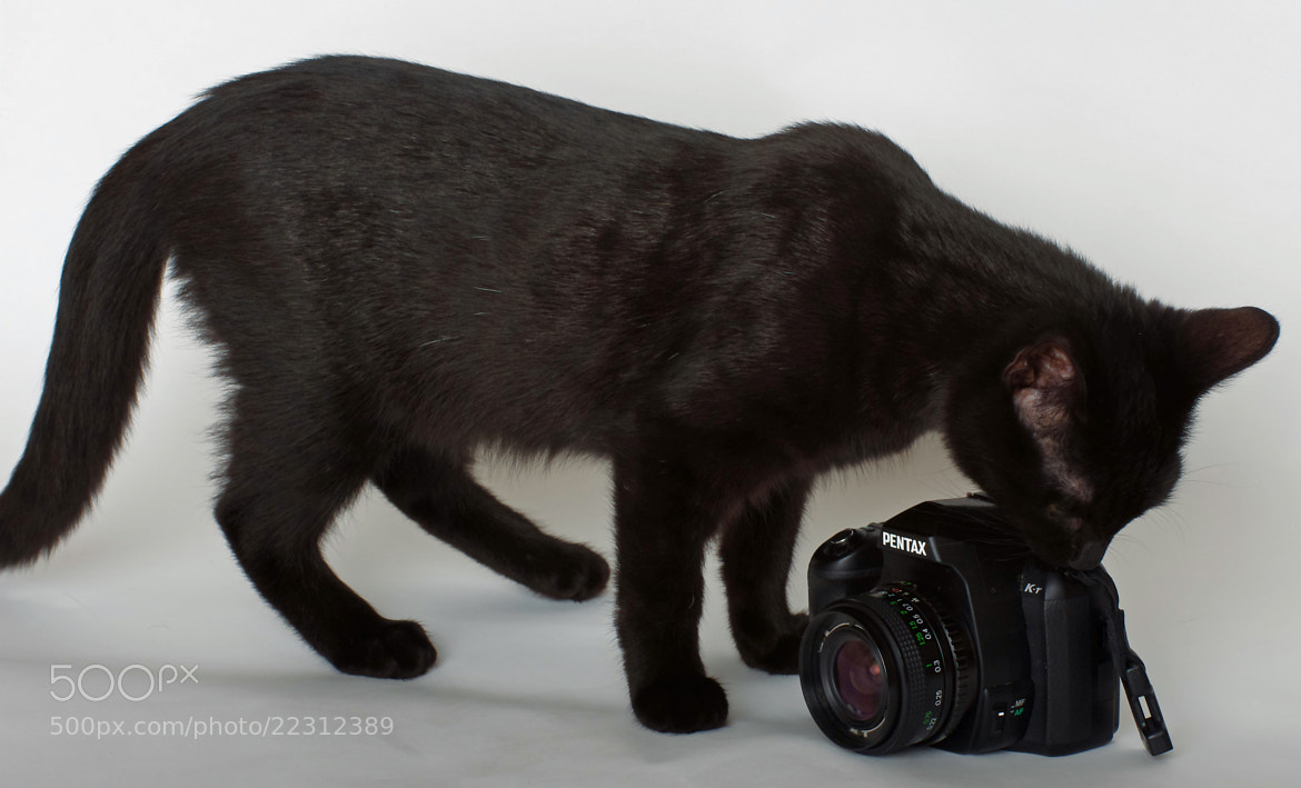Photograph Photography Kitten by Lee Ashman on 500px