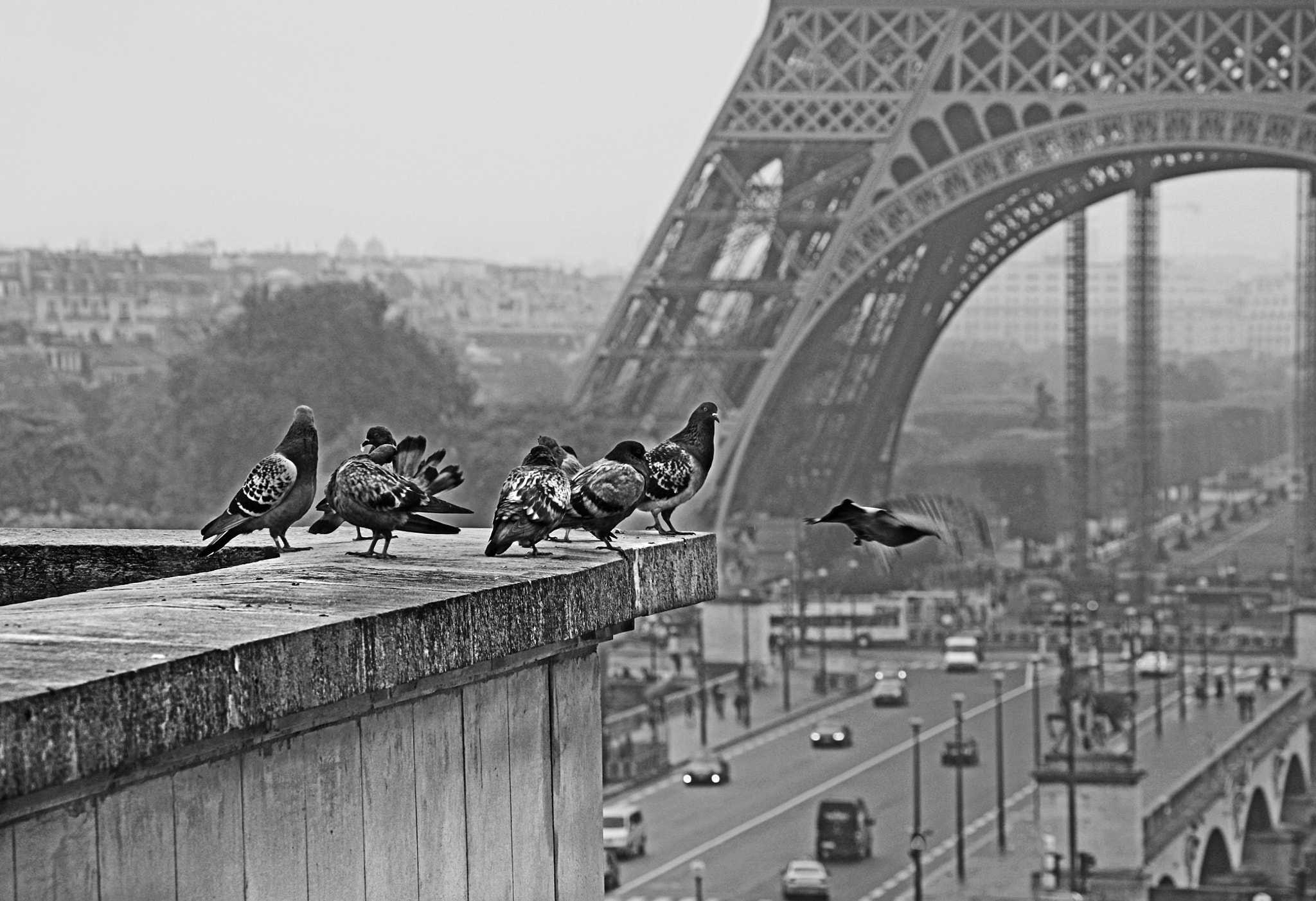 Photograph pigeons parisiens by Claudia Moeckel on 500px