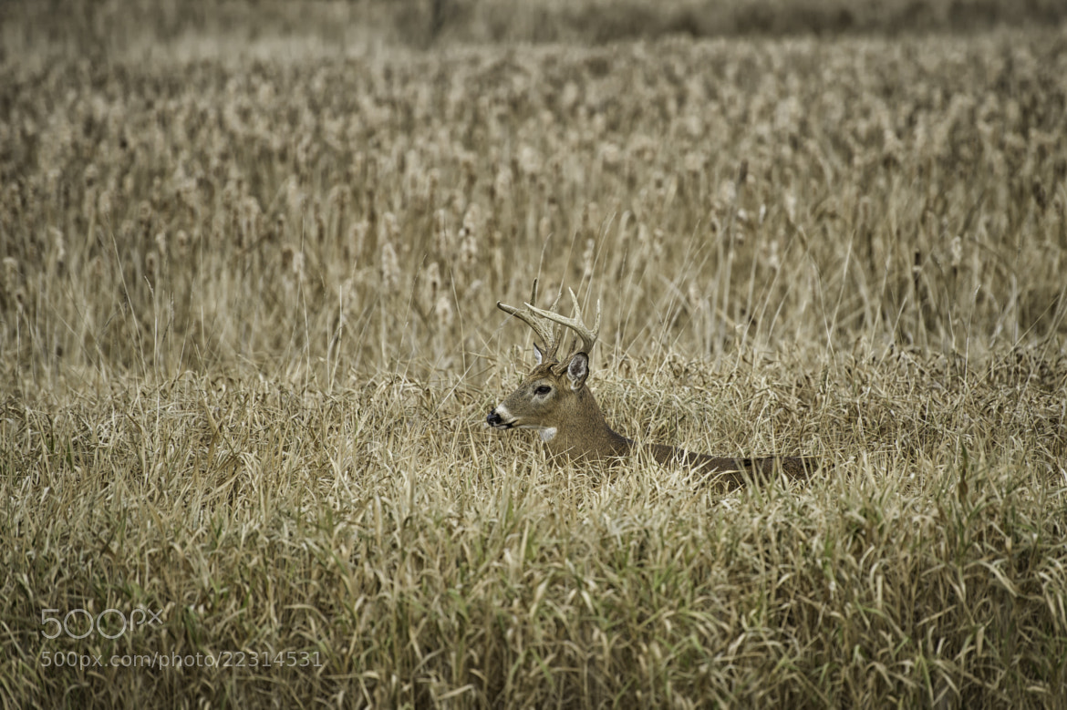 Photograph Hidden in the Field by Daniel Parent on 500px