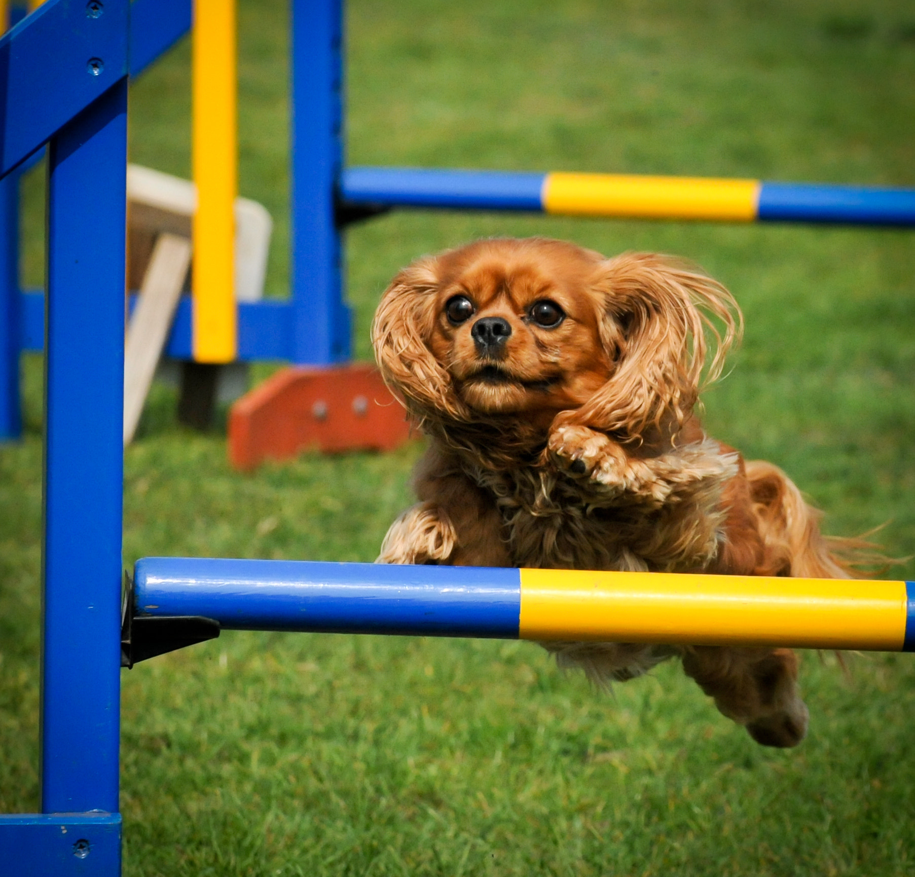 Photograph Dog Leap by Alan Bennett on 500px
