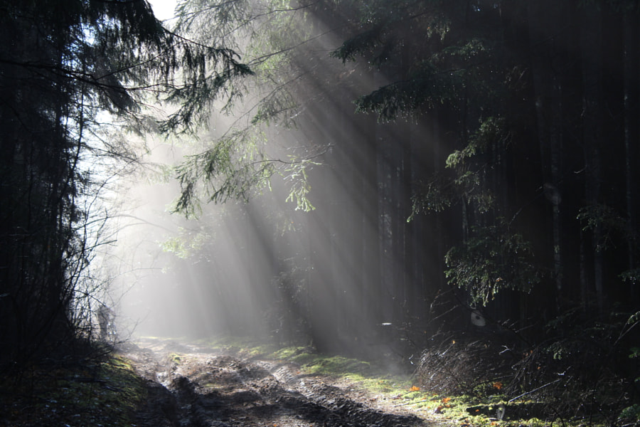 A forest road under the rays of the sun, автор — Jake Pause на 500px.com