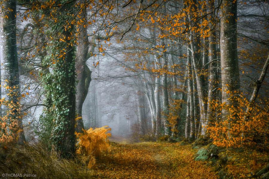 Autumn mood!, автор — Patrice Thomas на 500px.com