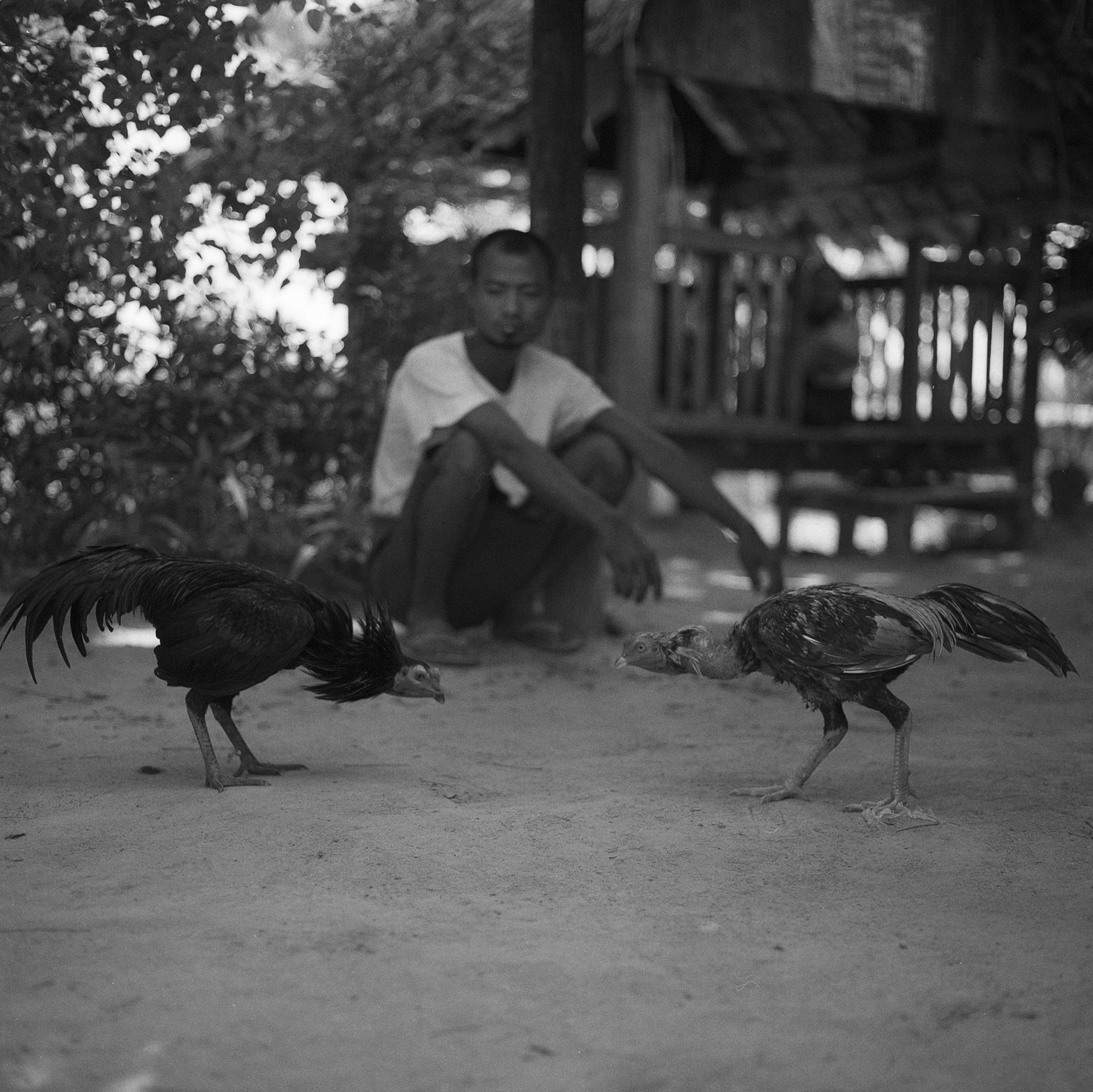 Photograph cockfight, unnamed village by  momofuku on 500px