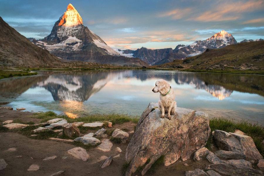 Luna & Matterhorn, автор — Iza Łysoń на 500px.com