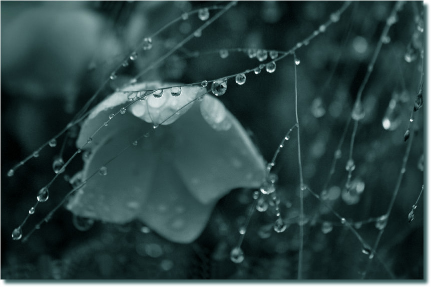 Photograph In the rain by Eva  Krejci on 500px